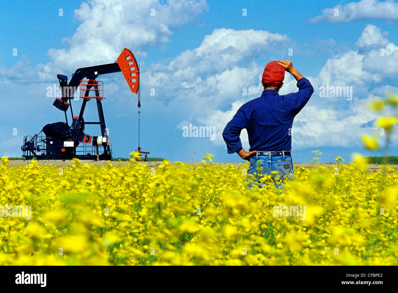 A man looks out over a blooming canola field with oil pumpjack in the background near Carlyle, Saskatchewan, Canada - Stock Image