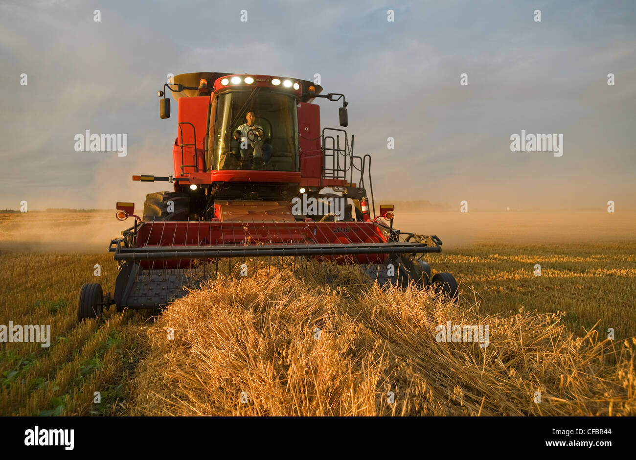 A farmer operates the controls of his combine while harvesting his swathed oats (Avena sativa) near Dugald, Manitoba, - Stock Image