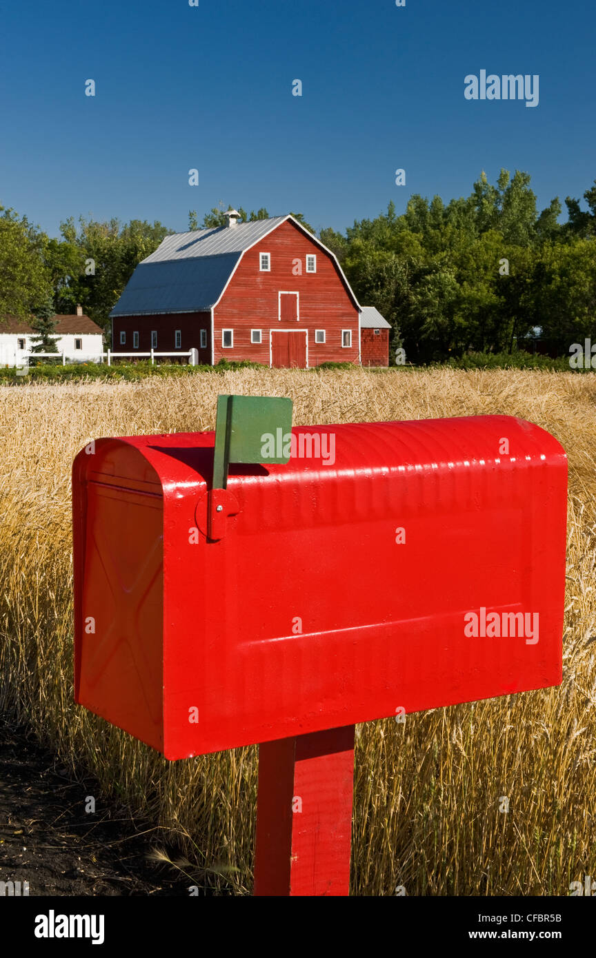 Close-up of rural mailbox with red barn and spring wheat field in the background, Grande Pointe, Manitoba, Canada - Stock Image