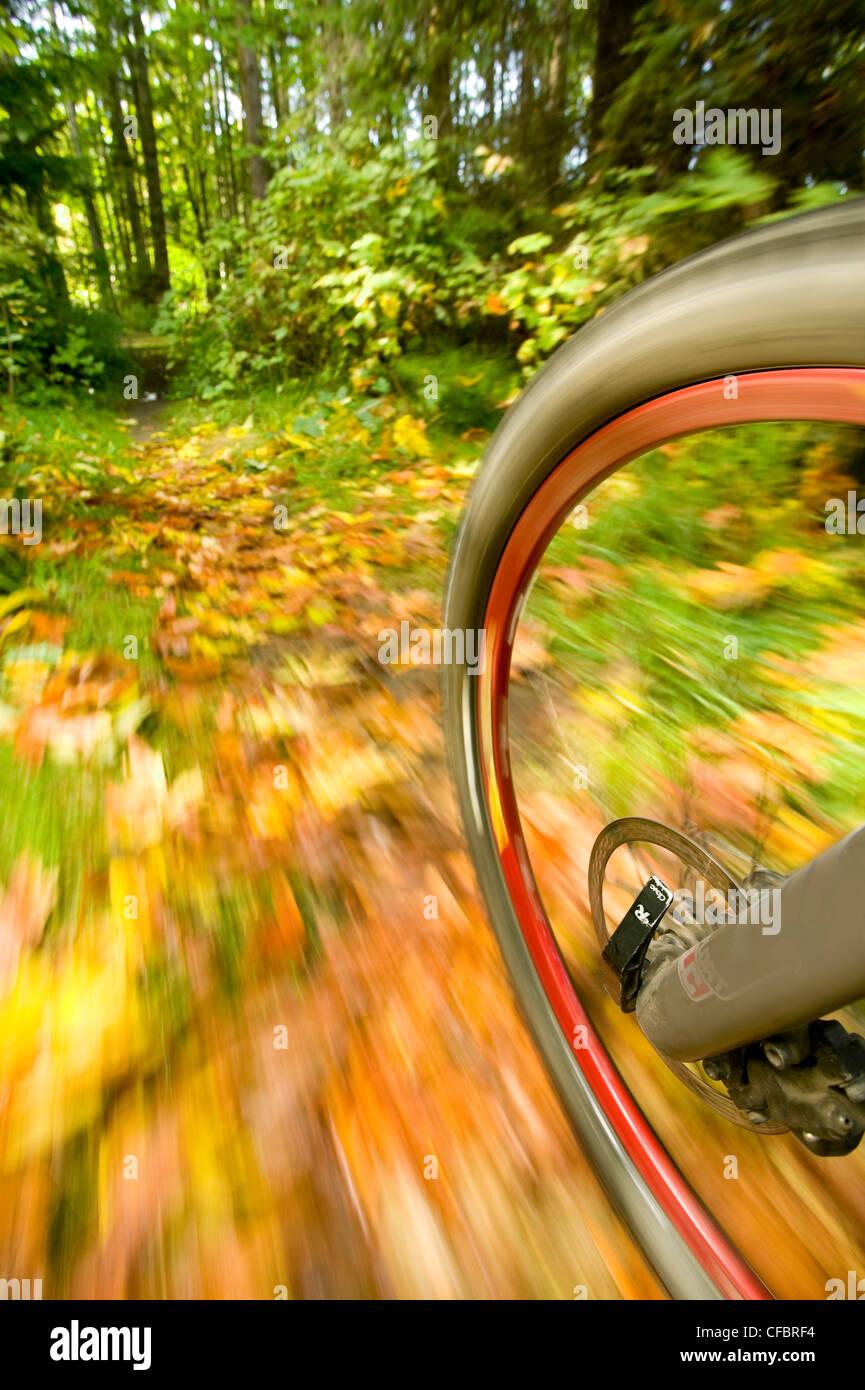 Autumn colors carpeting mountain bike trail set - Stock Image