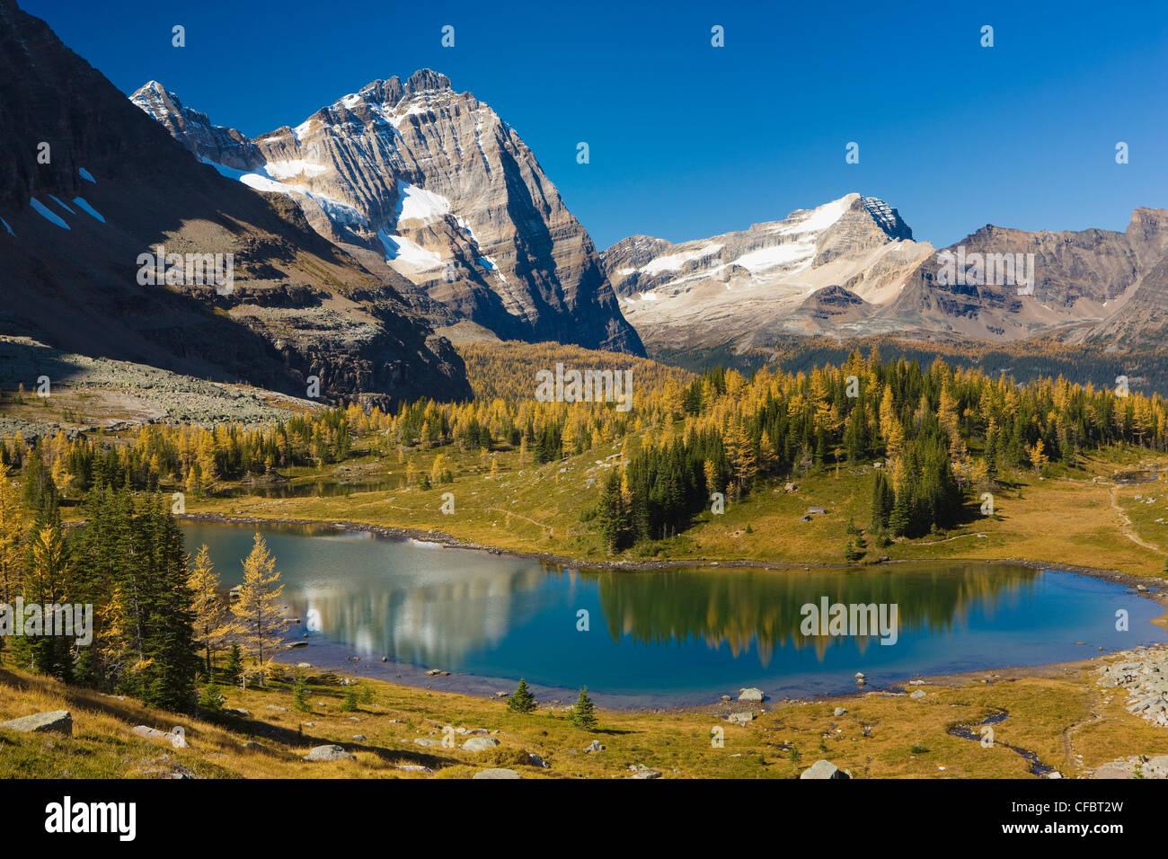 Overview of Opabin Plateau, Lake O'Hara, Yoho National Park, British Columbia, Canada - Stock Image