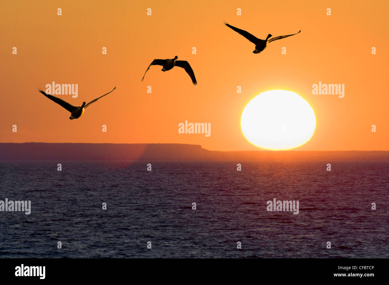 Canadgeese fly Lake Ontario sun sets beside Mount - Stock Image