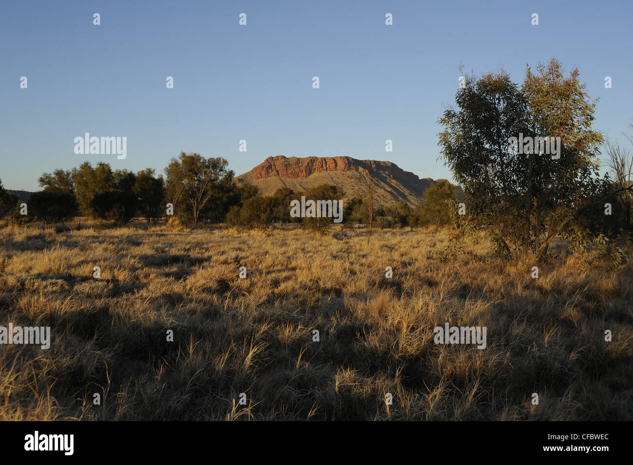 Savanna, bush, Alice Springs, Northern Territory, Australia - Stock Image