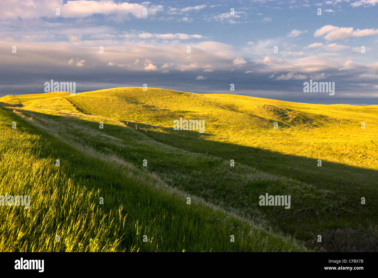 Fields in Spring time, Baildon, Saskatchewan, Canada. - Stock Image