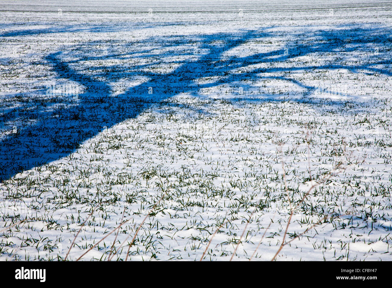 An abstract minimalist image of the shadow cast by a tree onto a snow covered field - Stock Image