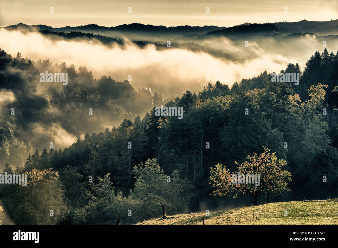 mountain forest, Emmental, autumn, fall, canton Bern, landscape, scenery, early morning fog, mist, fog patches, - Stock Image