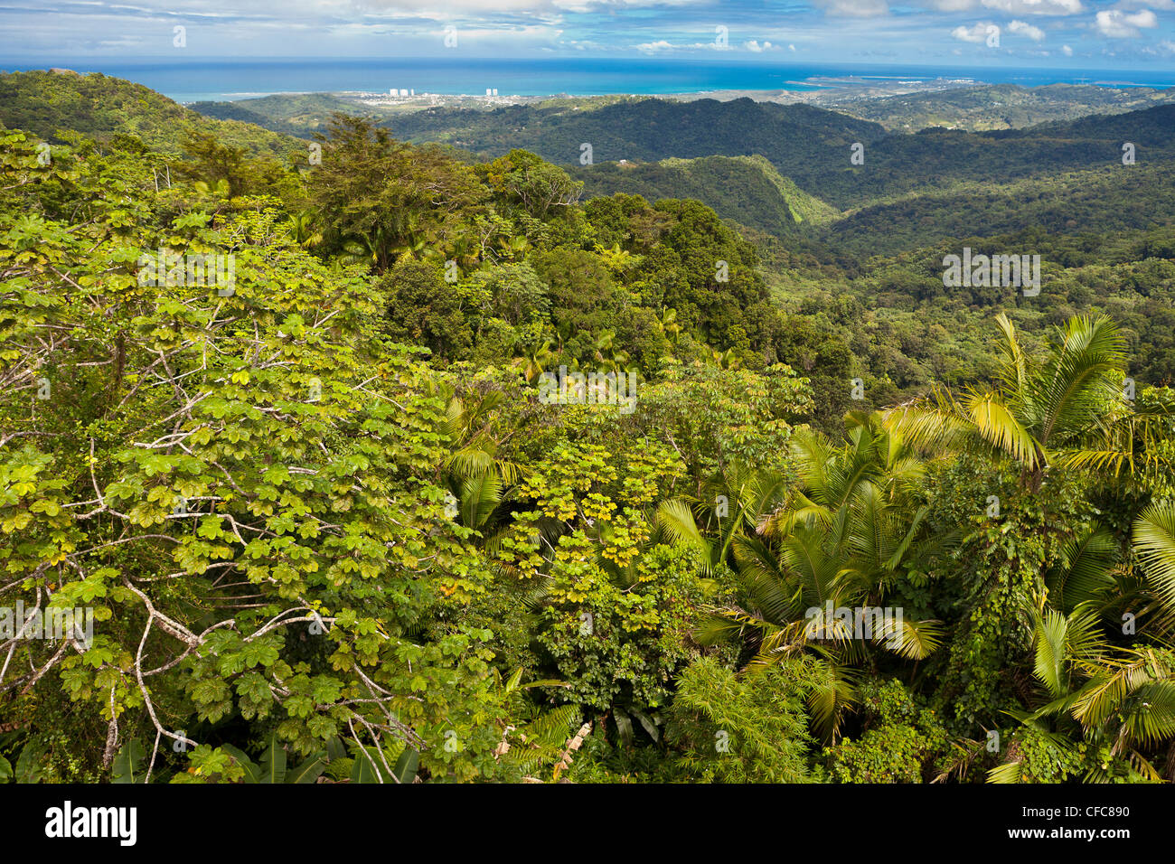 EL YUNQUE NATIONAL FOREST, PUERTO RICO - Rain forest jungle canopy landscape and coast near Luquillo - Stock Image