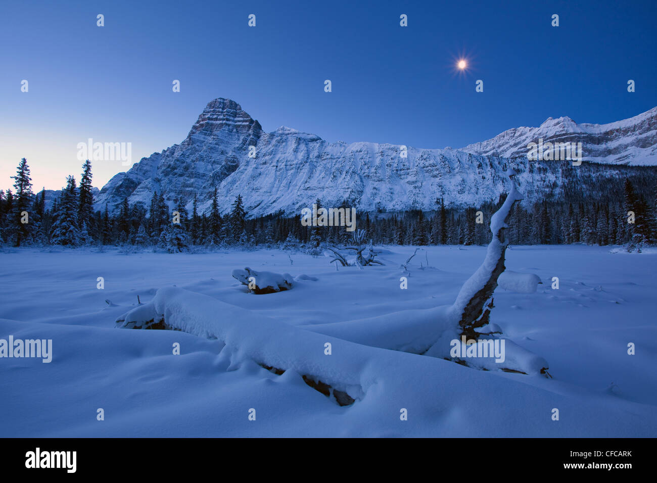 Mount Chephren illuminated moonlight cold winter - Stock Image