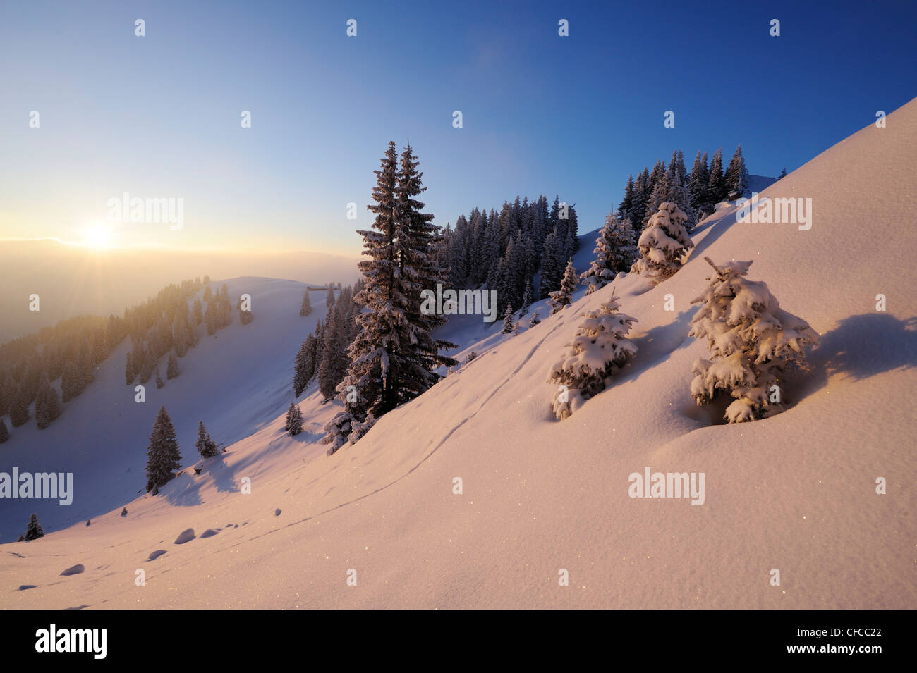 Snow covered spruces and slopes, Wallberg, Bavarian alps, Upper Bavaria, Bavaria, Germany, Europe Stock Photo