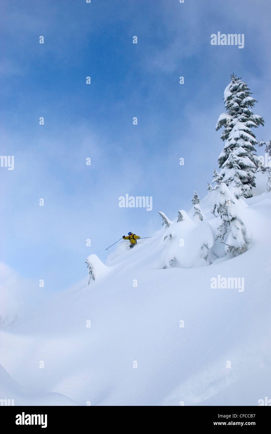 A mid adult man carving some deep turns in the Mt Baker backcountry Snoqualmie National Forest WA USA - Stock Image