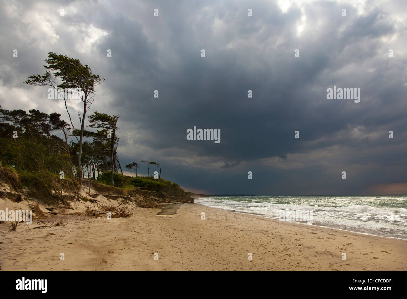 Thunderclouds over Darss west beach, Fischland-Darss-Zingst, Baltic Sea, Mecklenburg-West Pomerania, Germany - Stock Image