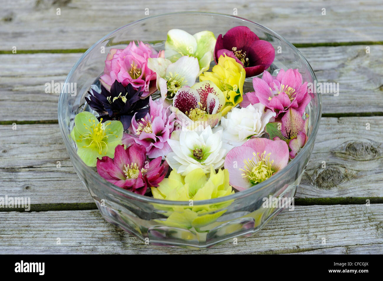 Floral Decoration Of Hellebore Flowers Floating On Water In A Glass
