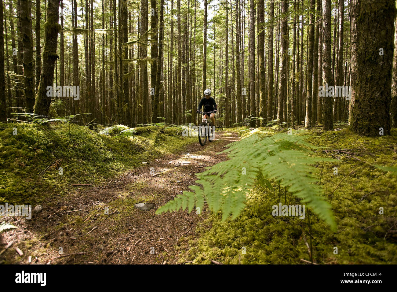 mountain bike rider travels along old logging - Stock Image