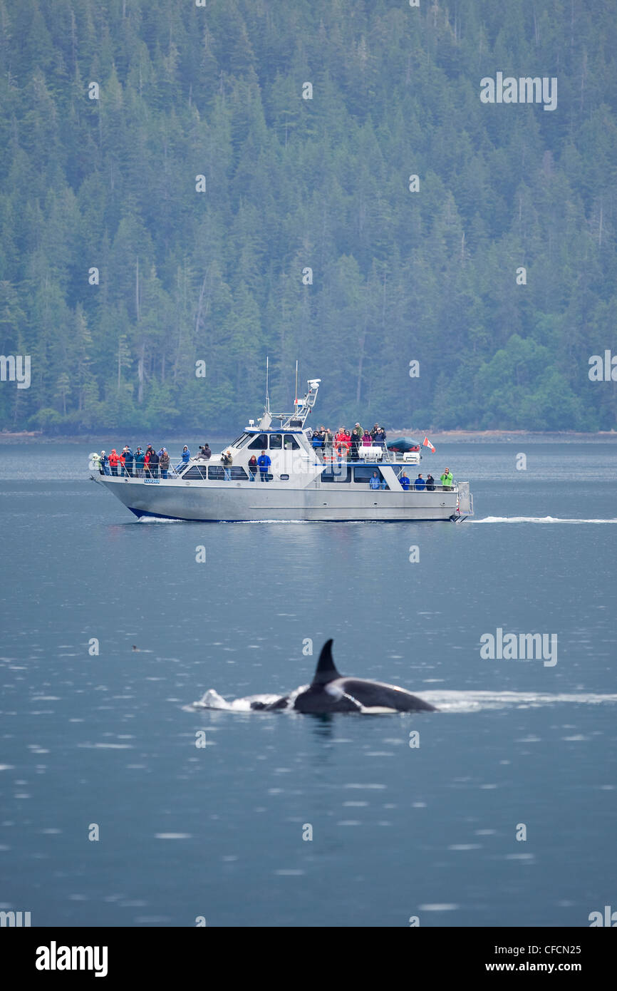 Whale watchers aboard Lukwtreated close encounter - Stock Image