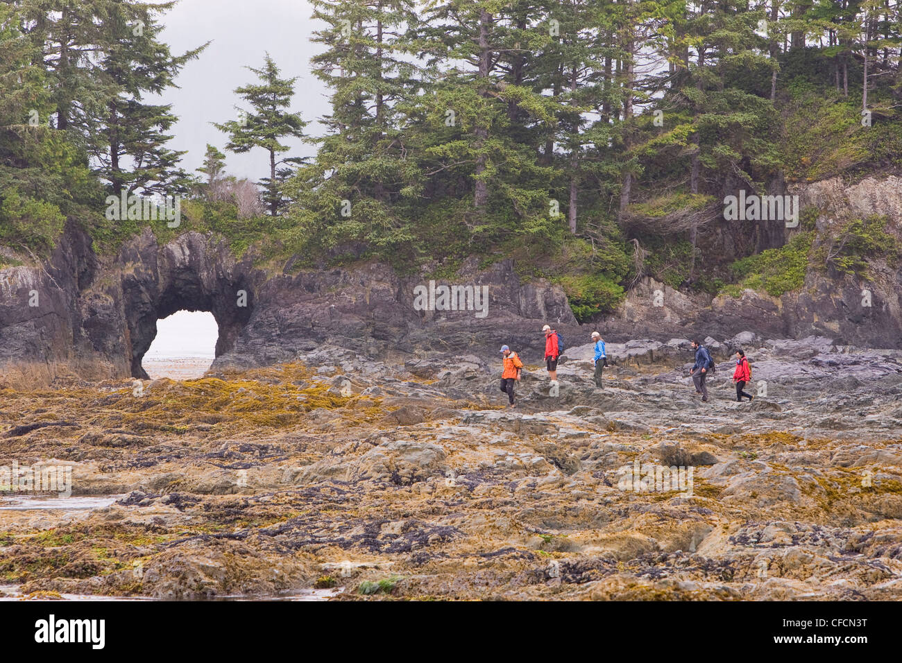 beachcombing at low tide. Spring Island, Kyuquot Sound, Northern Vancouver Island, British Columbia, Canada. - Stock Image
