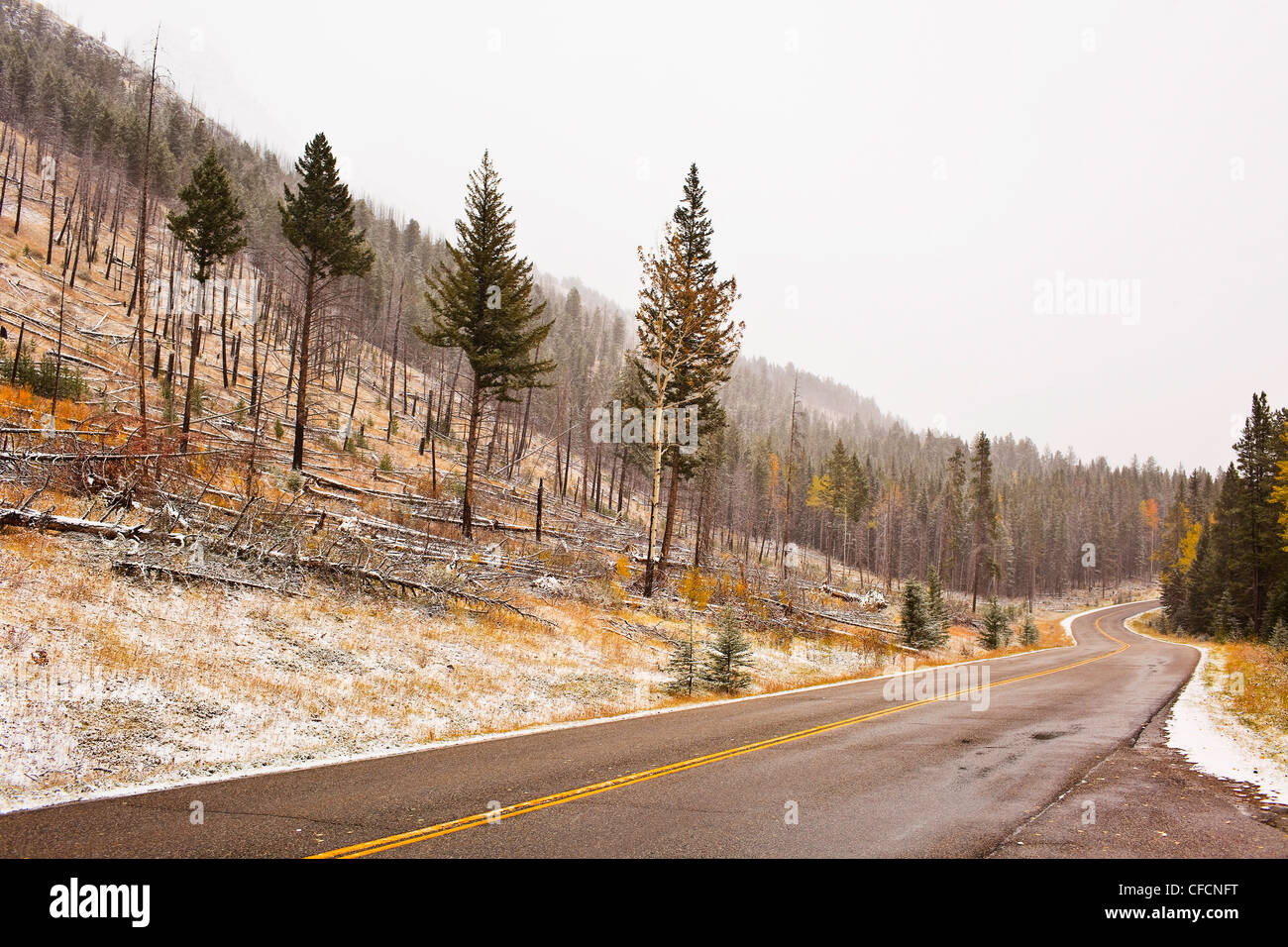 Bow Valley Parkway, Sawback Burn of 1993 and fall colours. Banff National Park, Alberta, Canada. - Stock Image