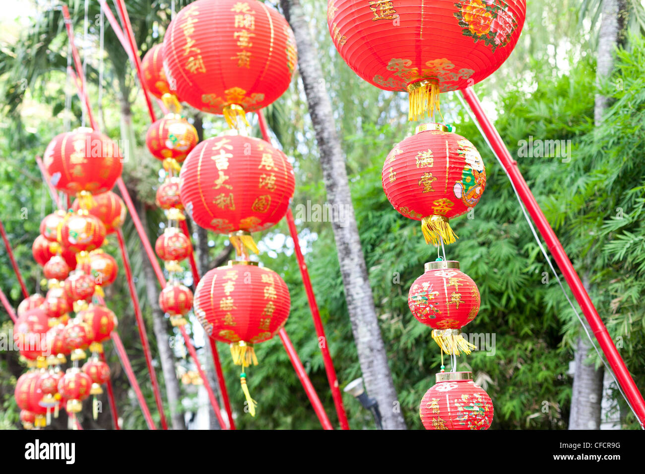 Chinese red lanterns in front of bamboo plants, Phuket, Thailand, Asia Stock Photo