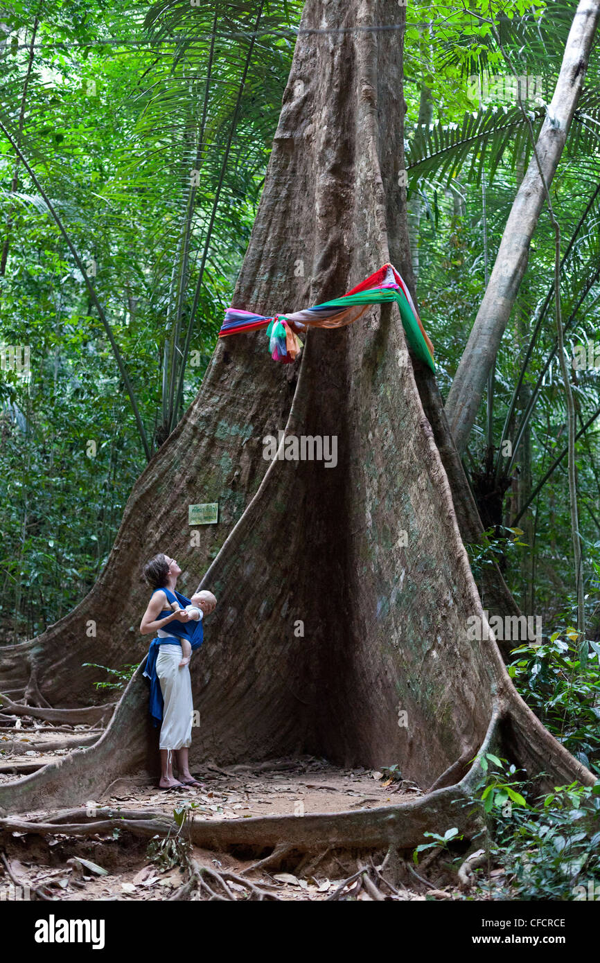 German woman with her baby in front of a huge banyan tree, Krabi, Thailand, Asia - Stock Image