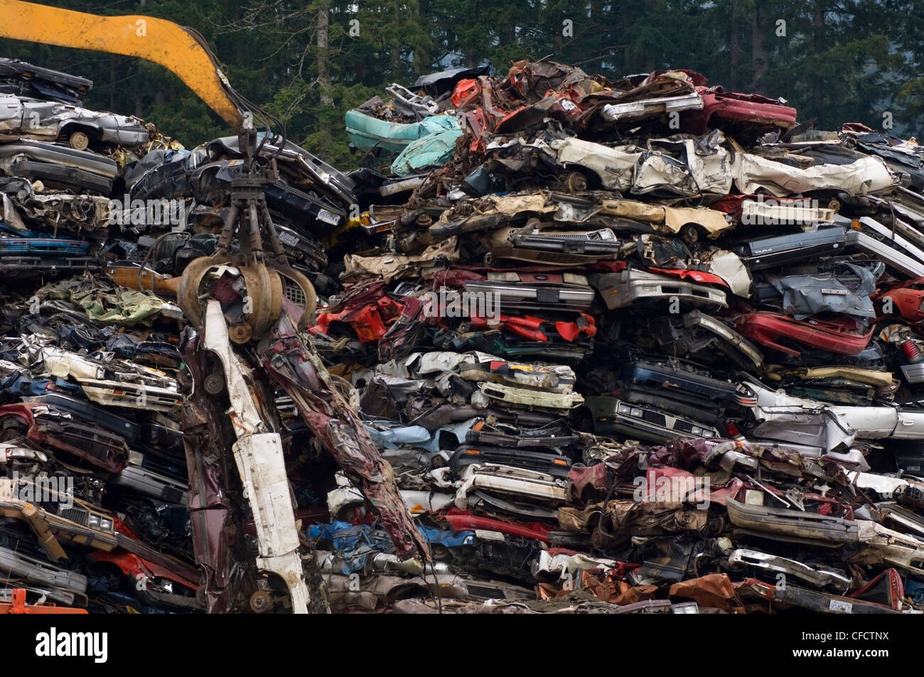Crane lifting flattened cars out of stack of obsolete cars in recycling yard, Vancouver Island, British Columbia, - Stock Image