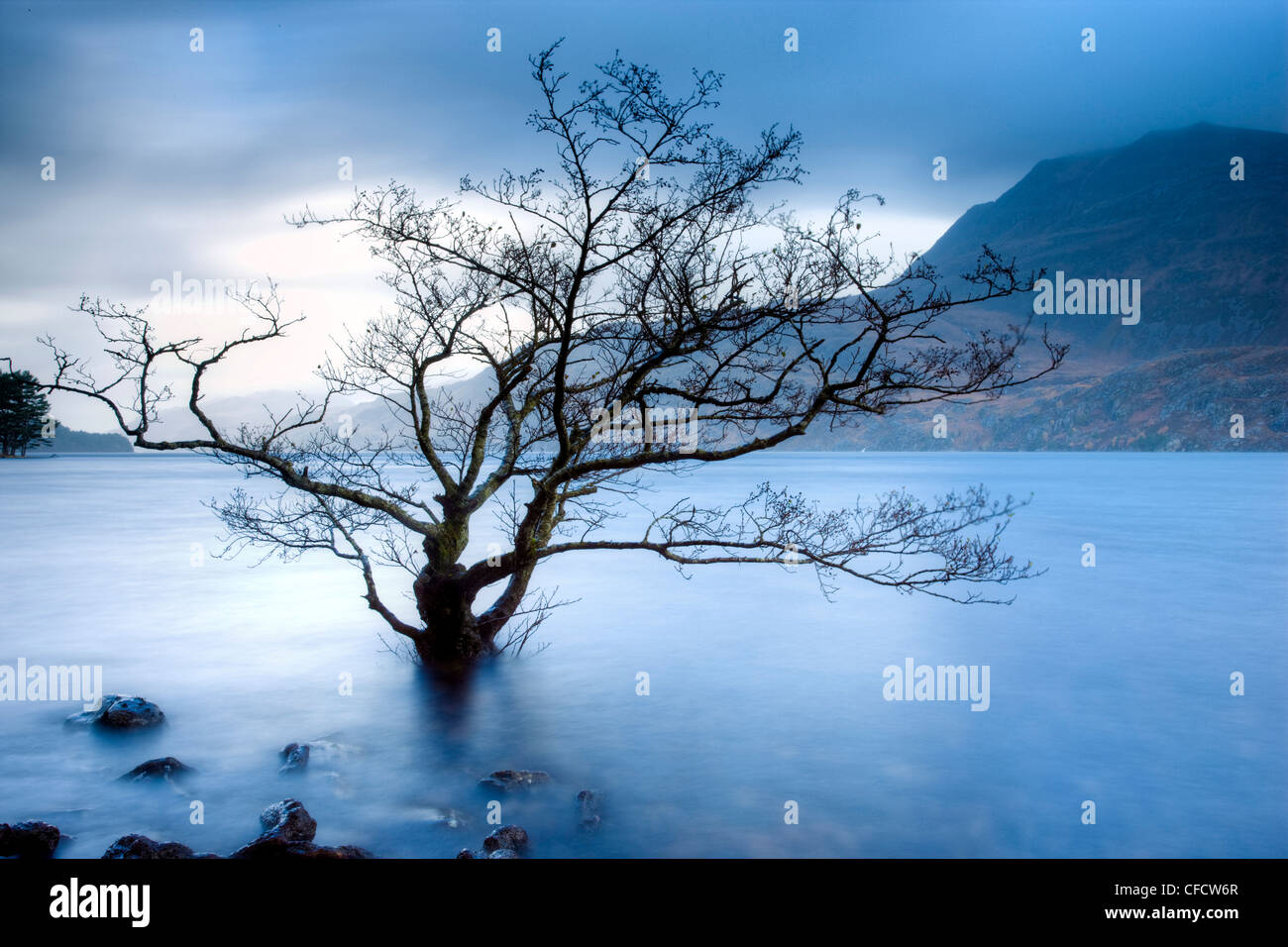 Partially submerged tree in Loch Maree on a stormy day, near Poolewe, Achnasheen, Wester Ross, Highlands, Scotland, - Stock Image
