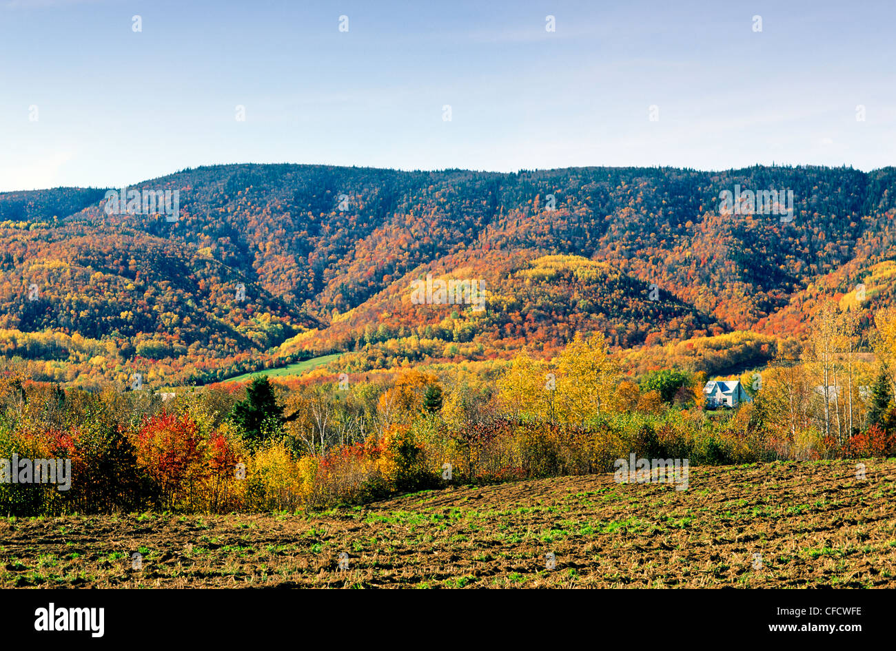 Fall foliage, Maria, Quebec, Canada - Stock Image
