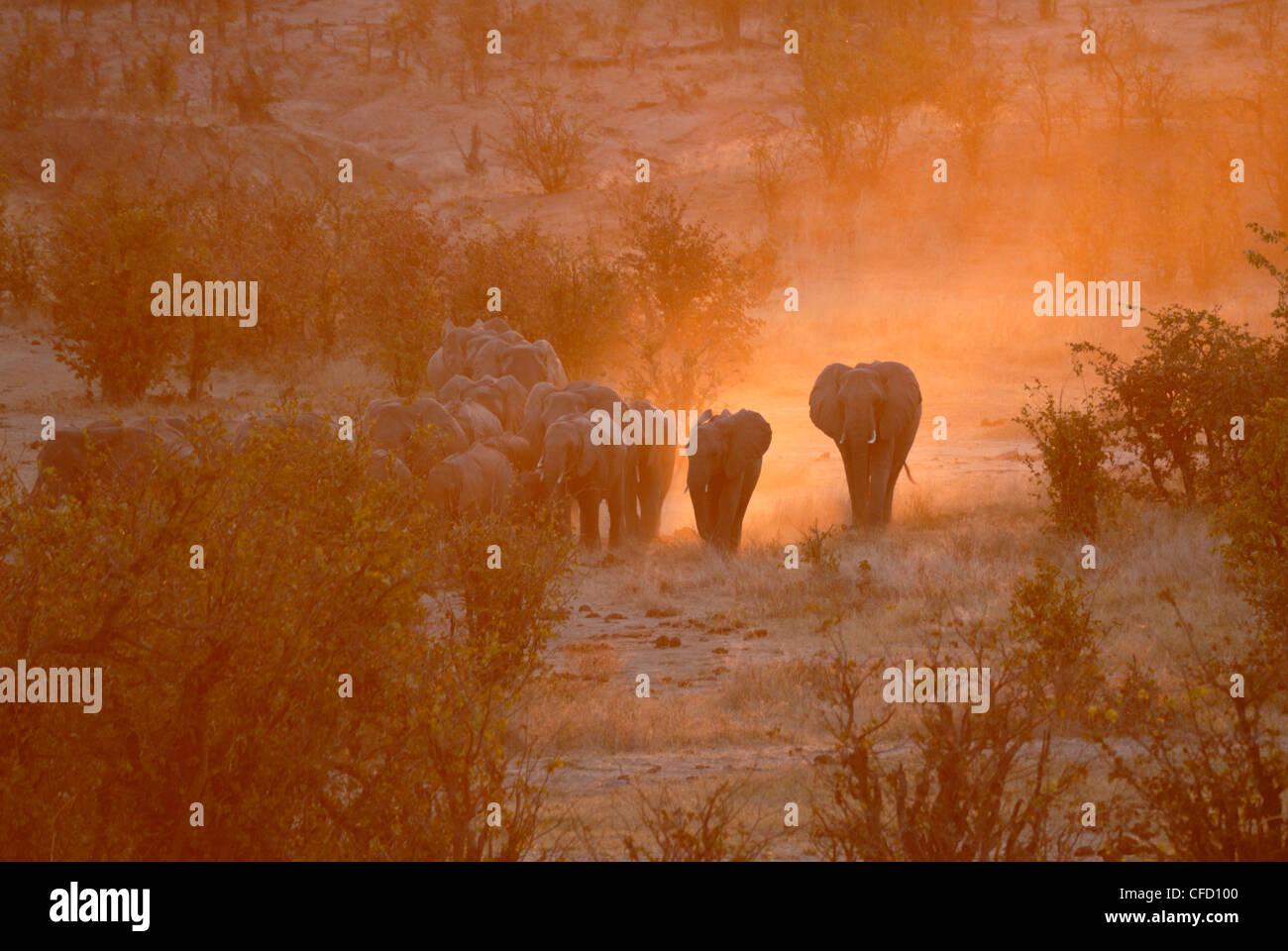 Elephants, Hwange National Park, Zimbabwe, Africa Stock Photo