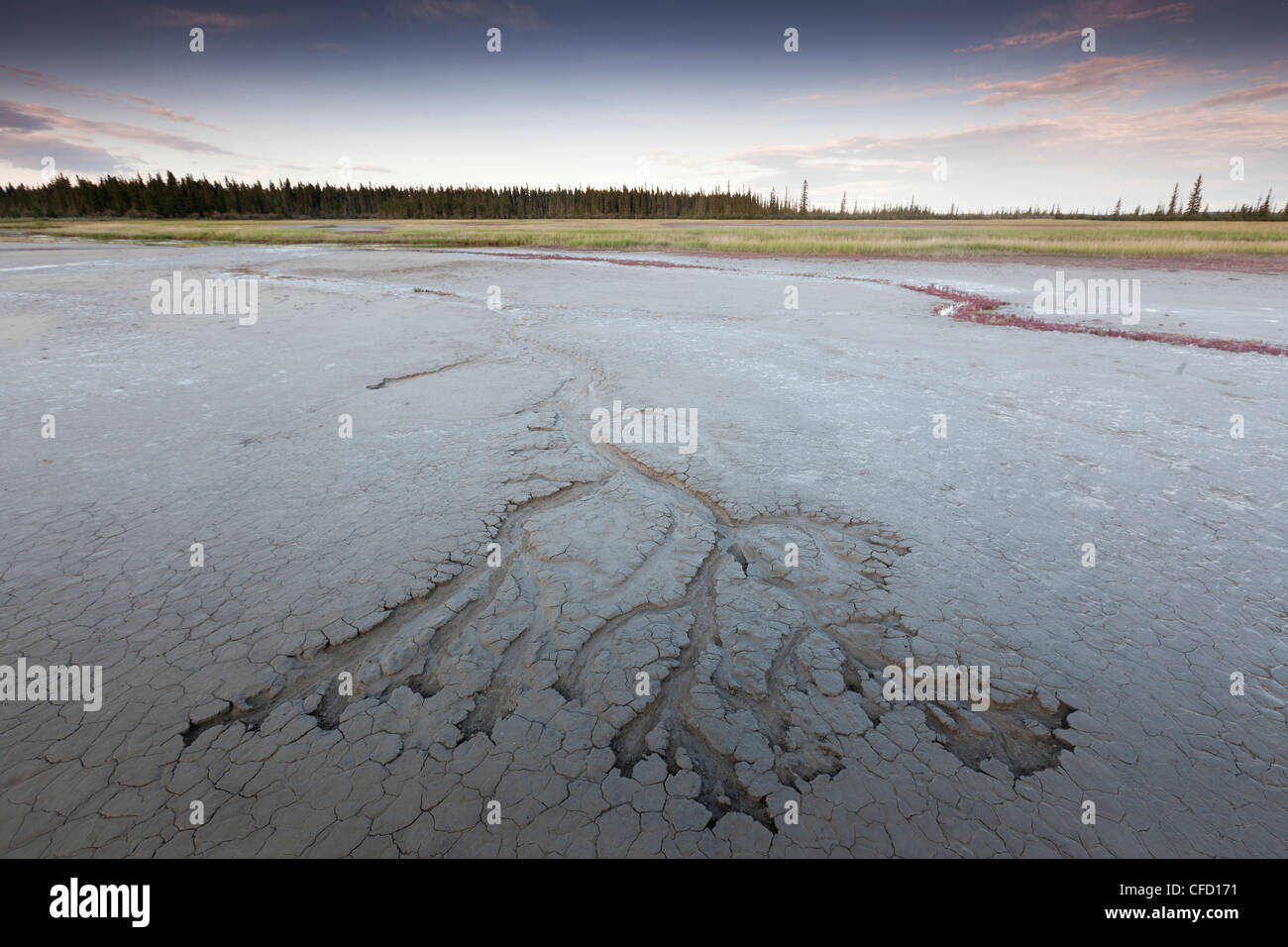 The Salt Plains in Wood Buffalo National Park located on the border of Alberta and the Northwest Territories, Canada - Stock Image