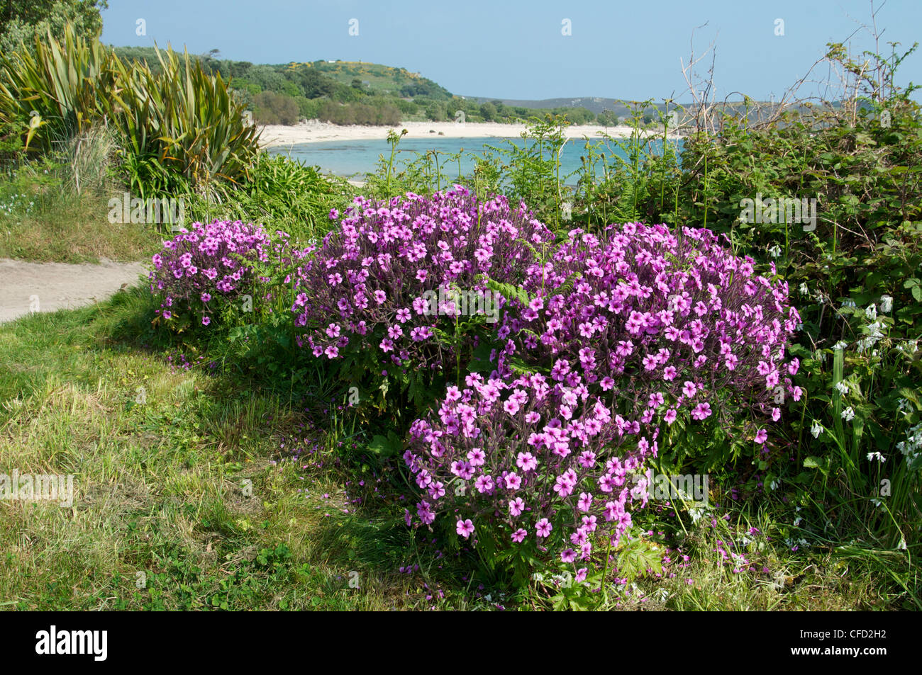 Bryher, Isles of Scilly, United Kingdom, Europe - Stock Image