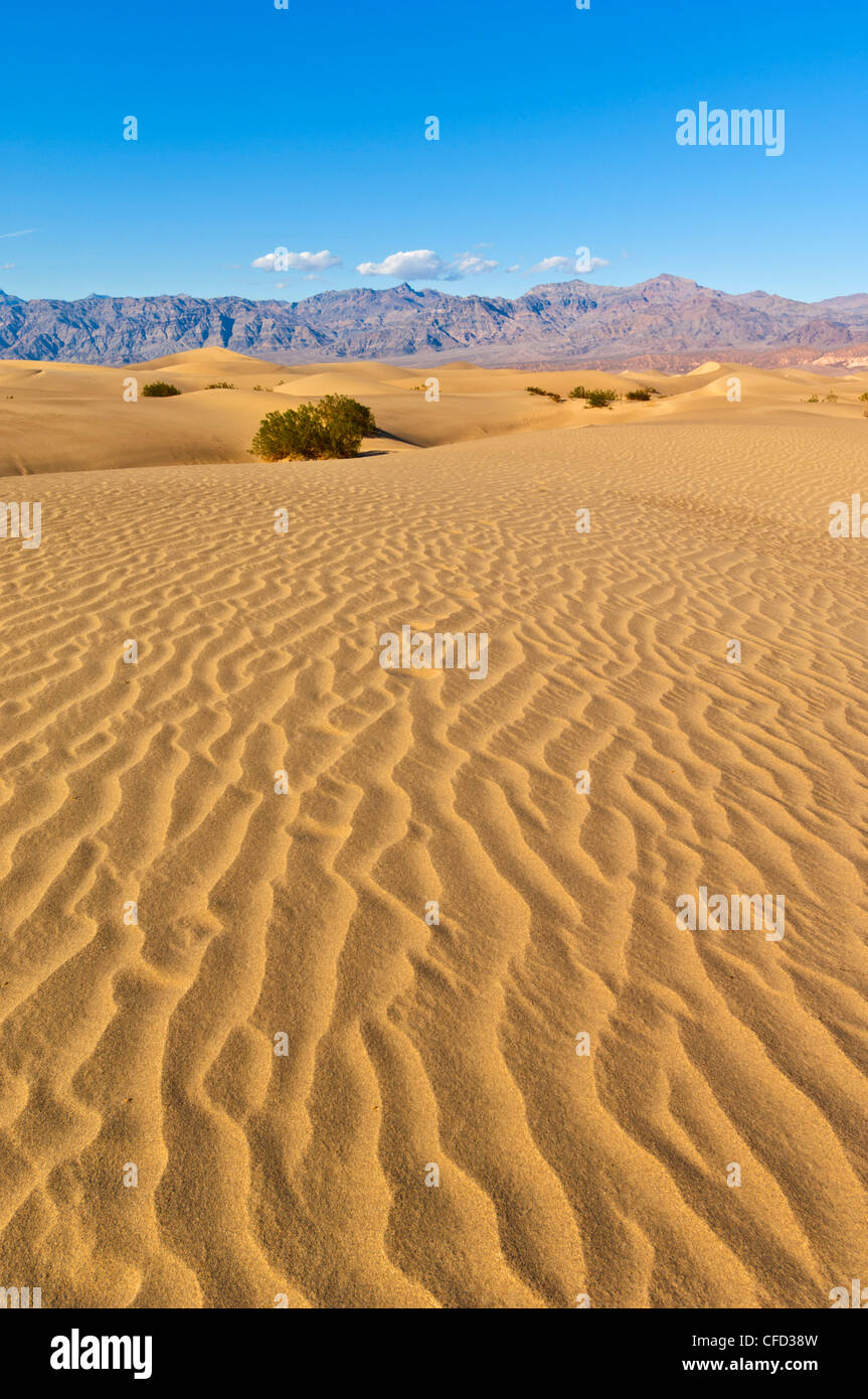Sand ripples, Stovepipe Wells, Death Valley National Park, California, USA Stock Photo