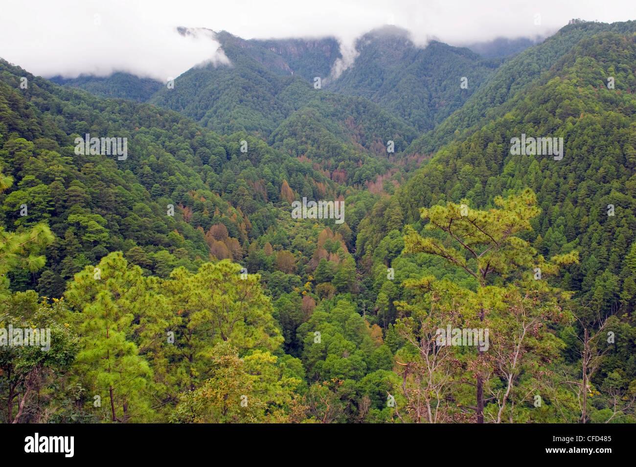 Rain forest of Parque Nacional Montana de Celaque, Gracias, Honduras, Central America Stock Photo