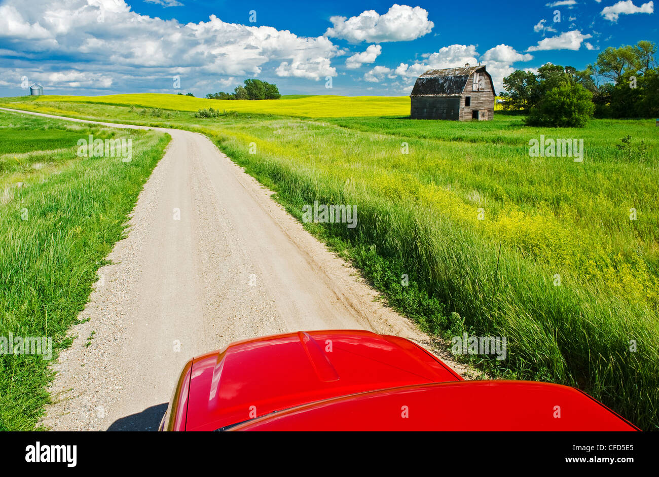 A Truck On Country Road With Old Barn And Canola Fields In The Background Near Somerset Manitoba Canada