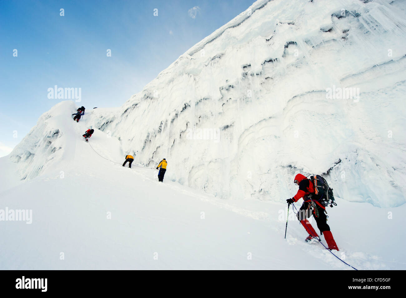 limbers on the glacier of Volcan Cotopaxi, at 5897m the highest active volcano in the world, Ecuador, South America - Stock Image