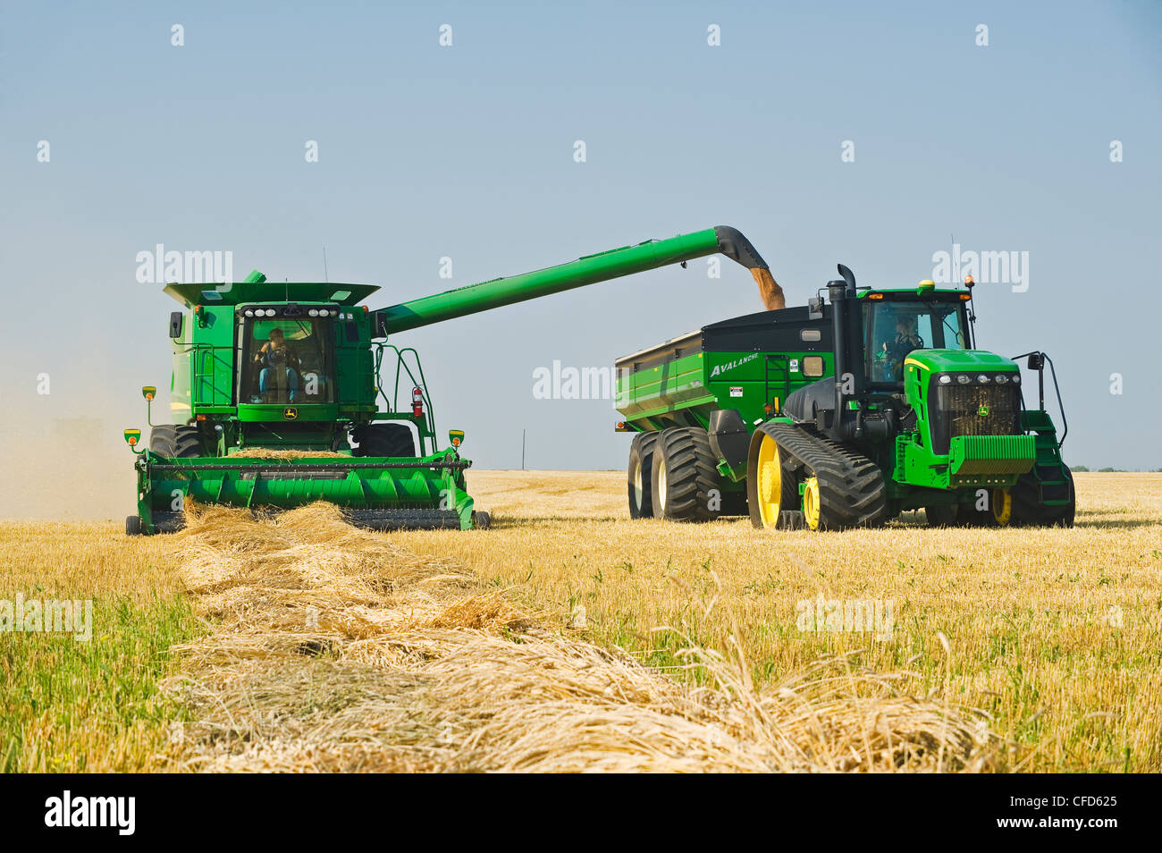 female combine operator harvests swathed spring - Stock Image
