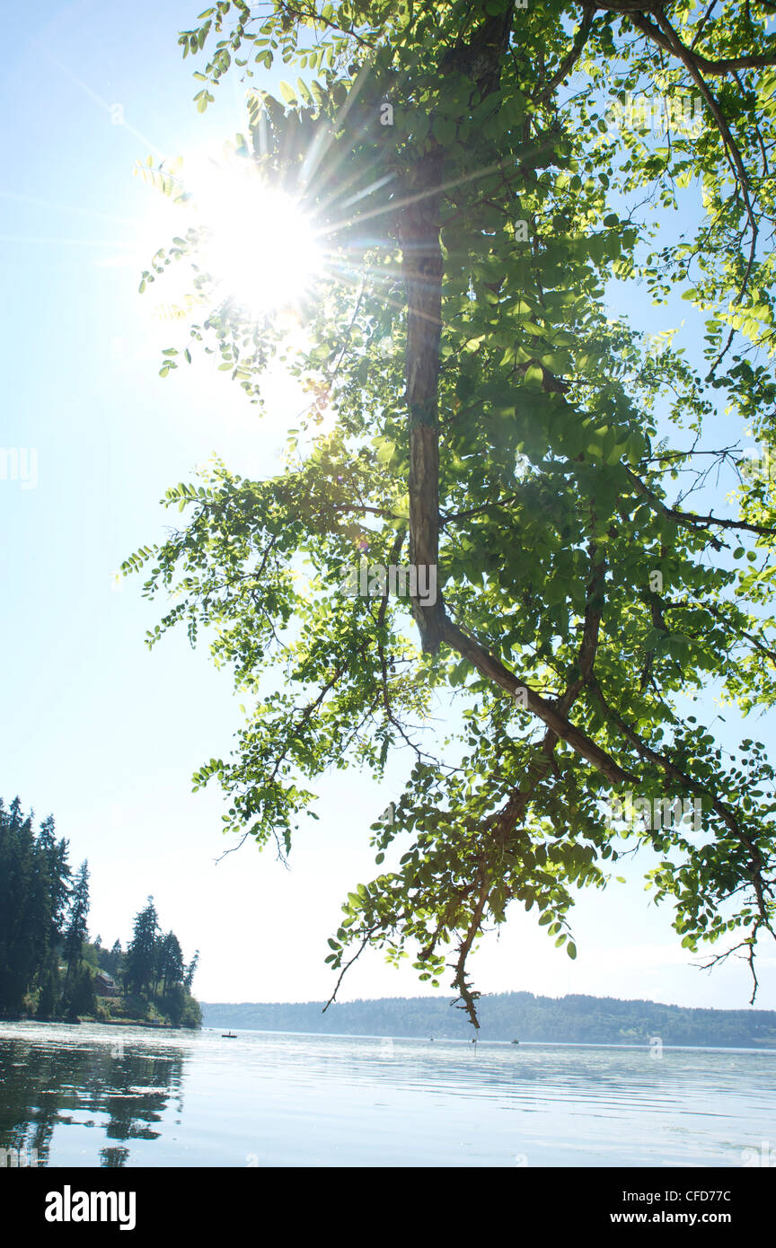 Sun shines through tree branch with Puget Sound, Vashon Island, Washington State, USA - Stock Image