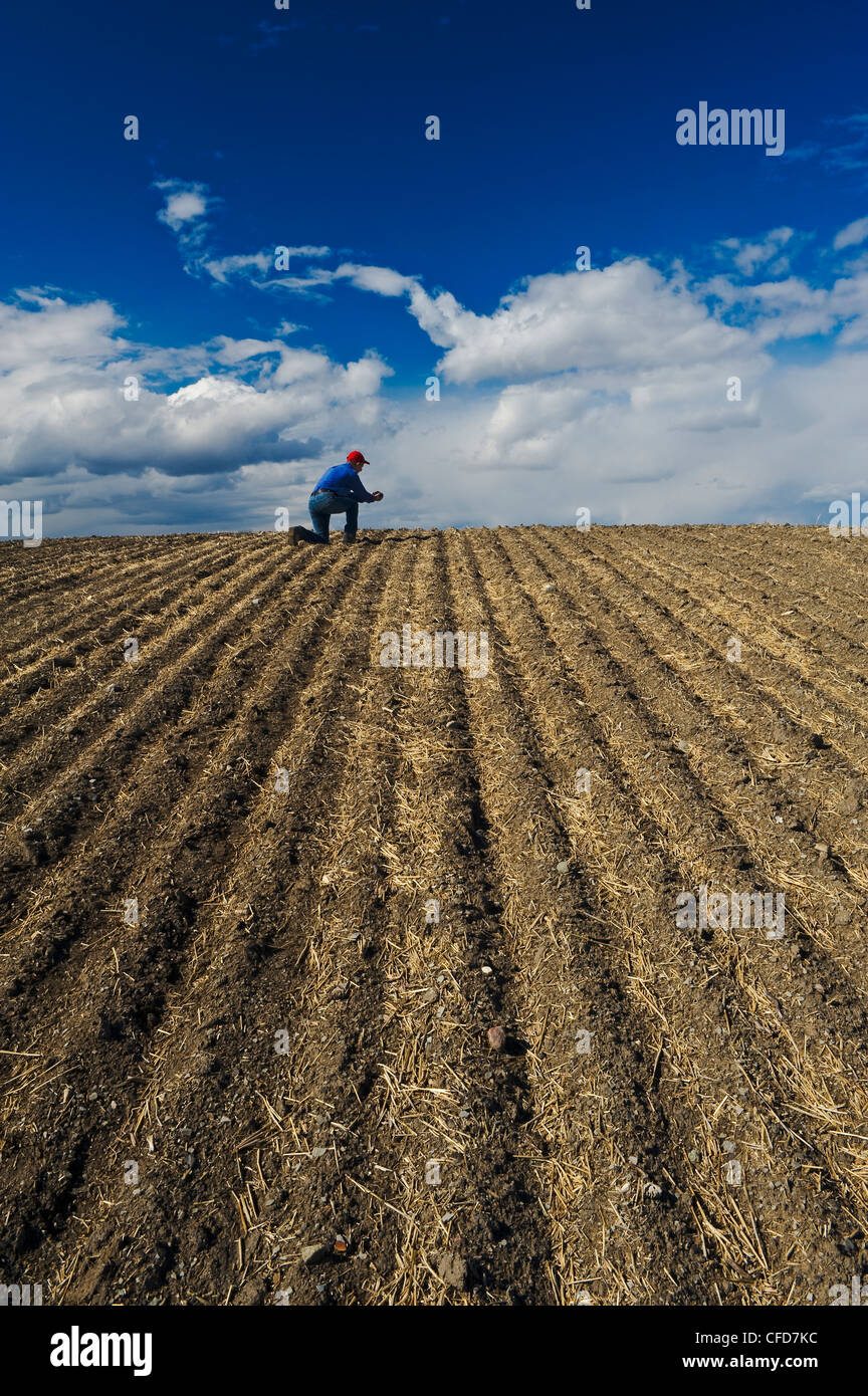 A man examines soil in a newly seeded field, Tiger Hills, Manitoba, Canada - Stock Image