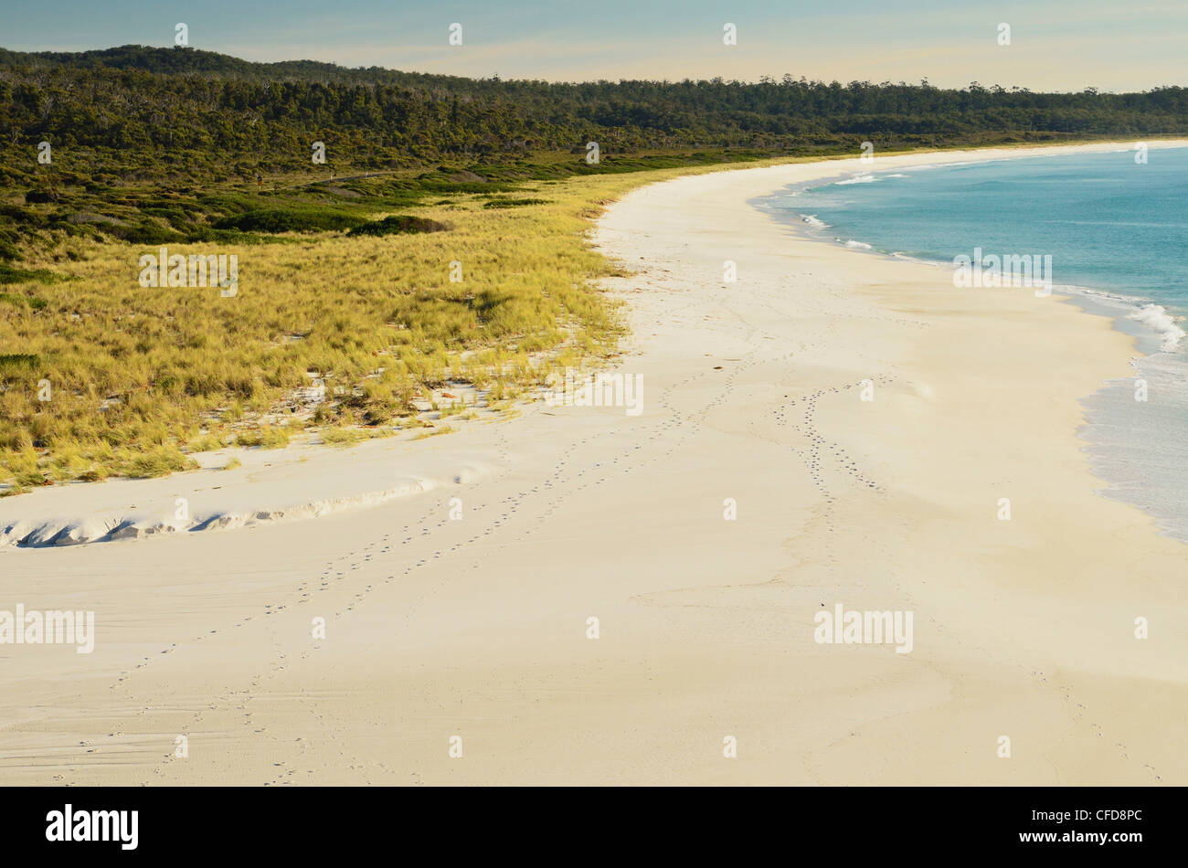 Beach at Sloop Lagoon, Bay of Fires, Bay of Fires Conservation Area, Tasmania, Australia, Pacific - Stock Image