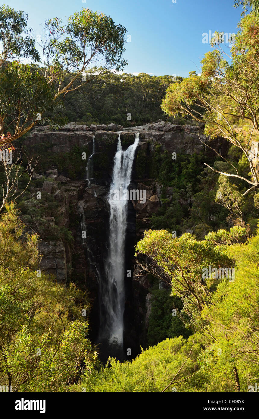 Carrington Falls, Budderoo National Park, New South Wales, Australia, Pacific - Stock Image