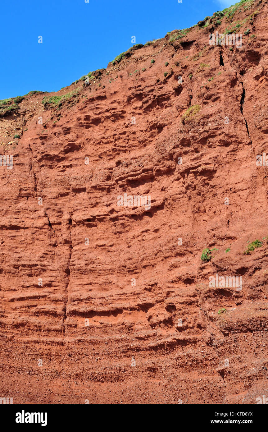 A cliff section of Old Red Sandstone at Langstone Rock, Dawlish, South Devon - showing Devonian stratigraphy. - Stock Image