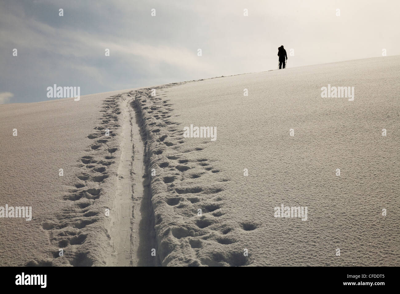 A silhouette of a female backcountry skier skinning along a track in the snow. - Stock Image