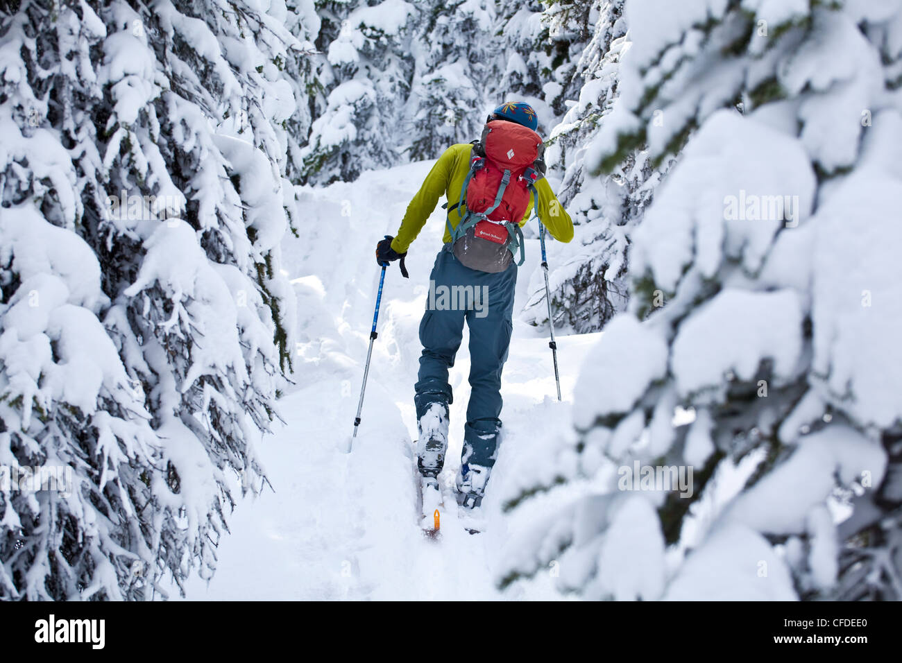 A male telemark skier skins his way up into the alpine, Icefields Parkway, Banff natinoal Park, Alberta, Canada - Stock Image