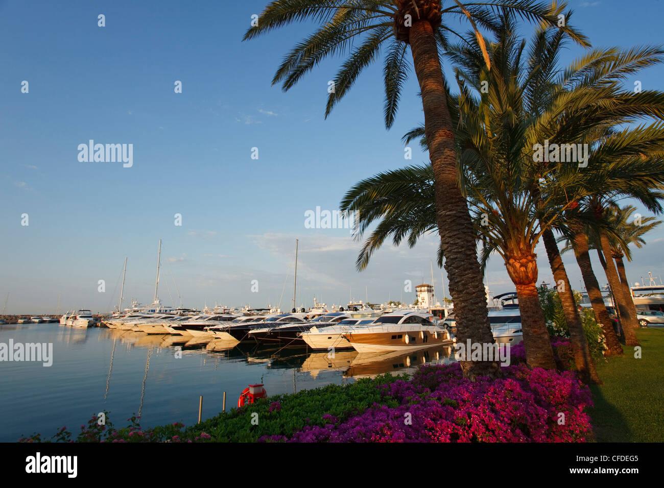 Boats at marina at Portals Nous, Mallorca, Balearic Islands, Spain, Europe - Stock Image