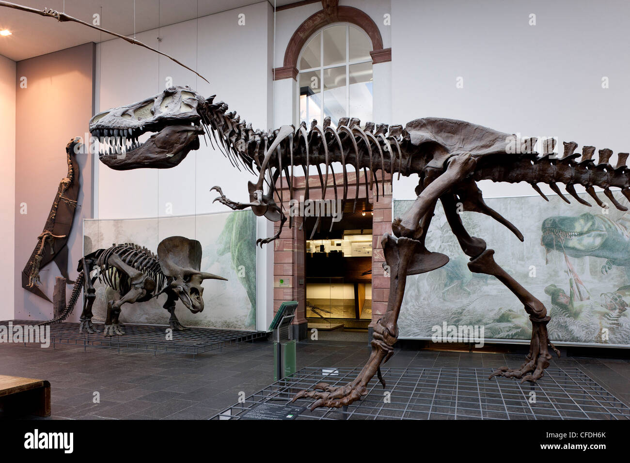 Senckenberg-Museum, view of into the the dinosaur hall, Frankfurt am Main, Hesse, Germany, Europe - Stock Image
