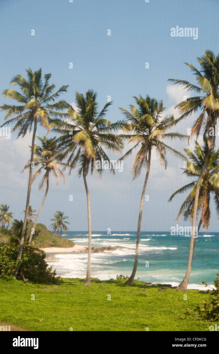 coconut palm trees undeveloped beach Content Point South End Corn Island Nicaragua Caribbean Sea - Stock Image