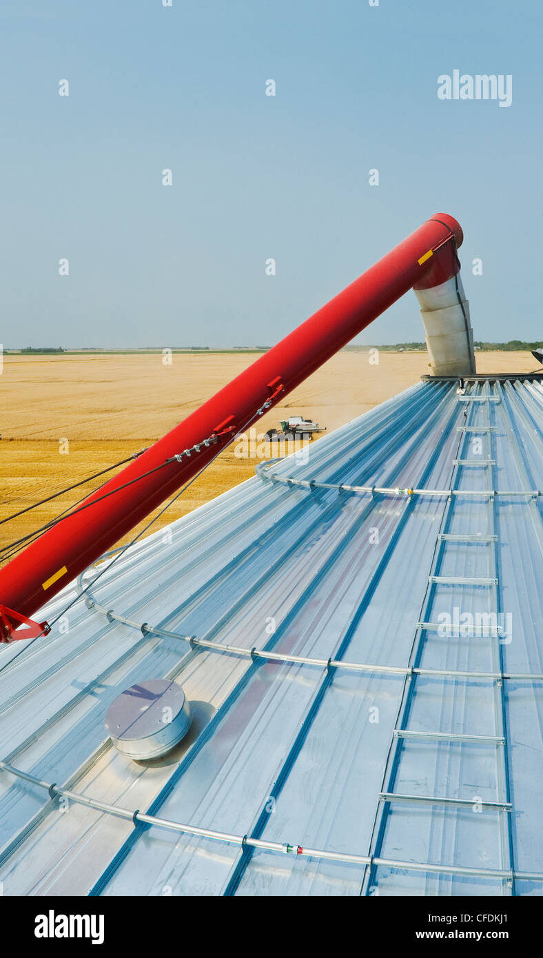 Grain storage bin and auger with combine harvesting wheat in