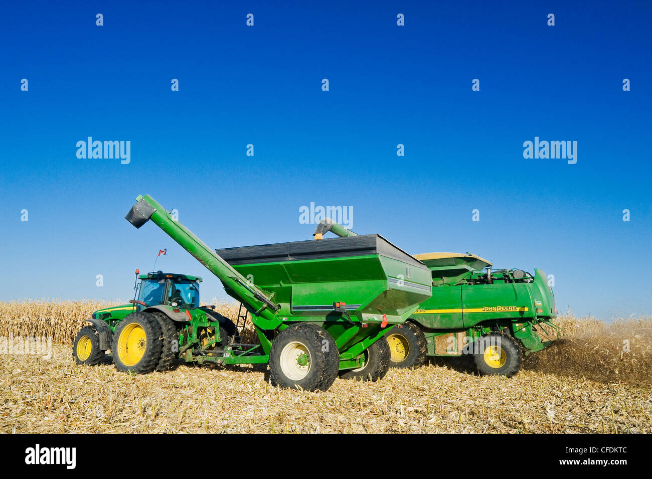 A combine empties into a grain wagon on the go during the feed corn harvest, near Niverville, Manitoba, Canada - Stock Image