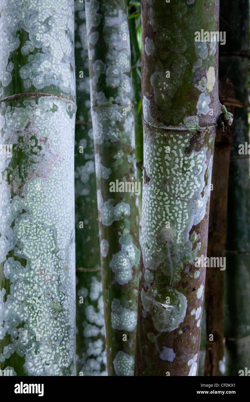 Bamboo Detail at Hellfire Pass, near Kanchanaburi, Thailand - Stock Image