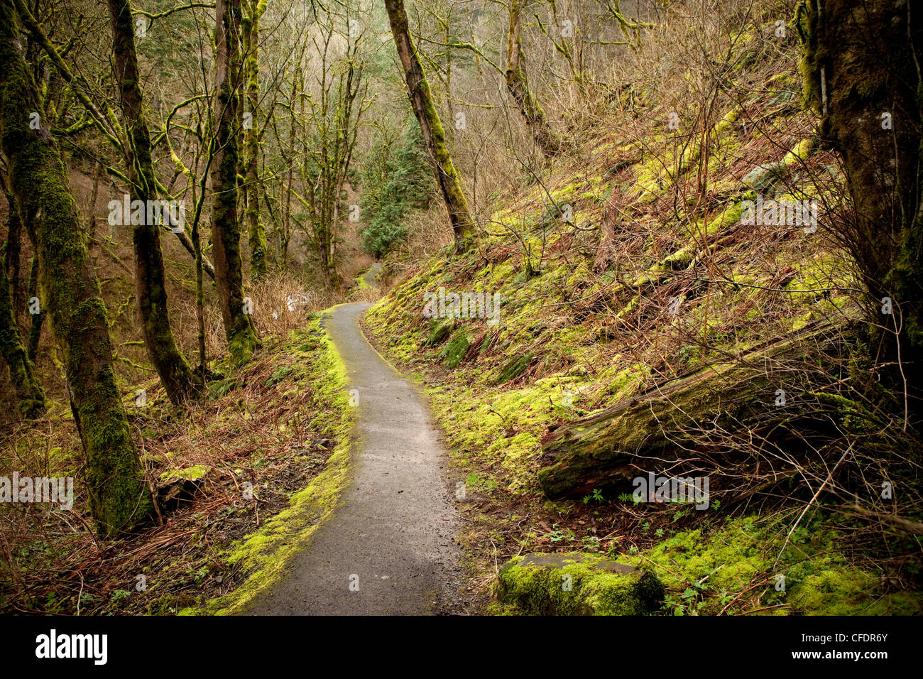 Path leading through a mossy forest. - Stock Image