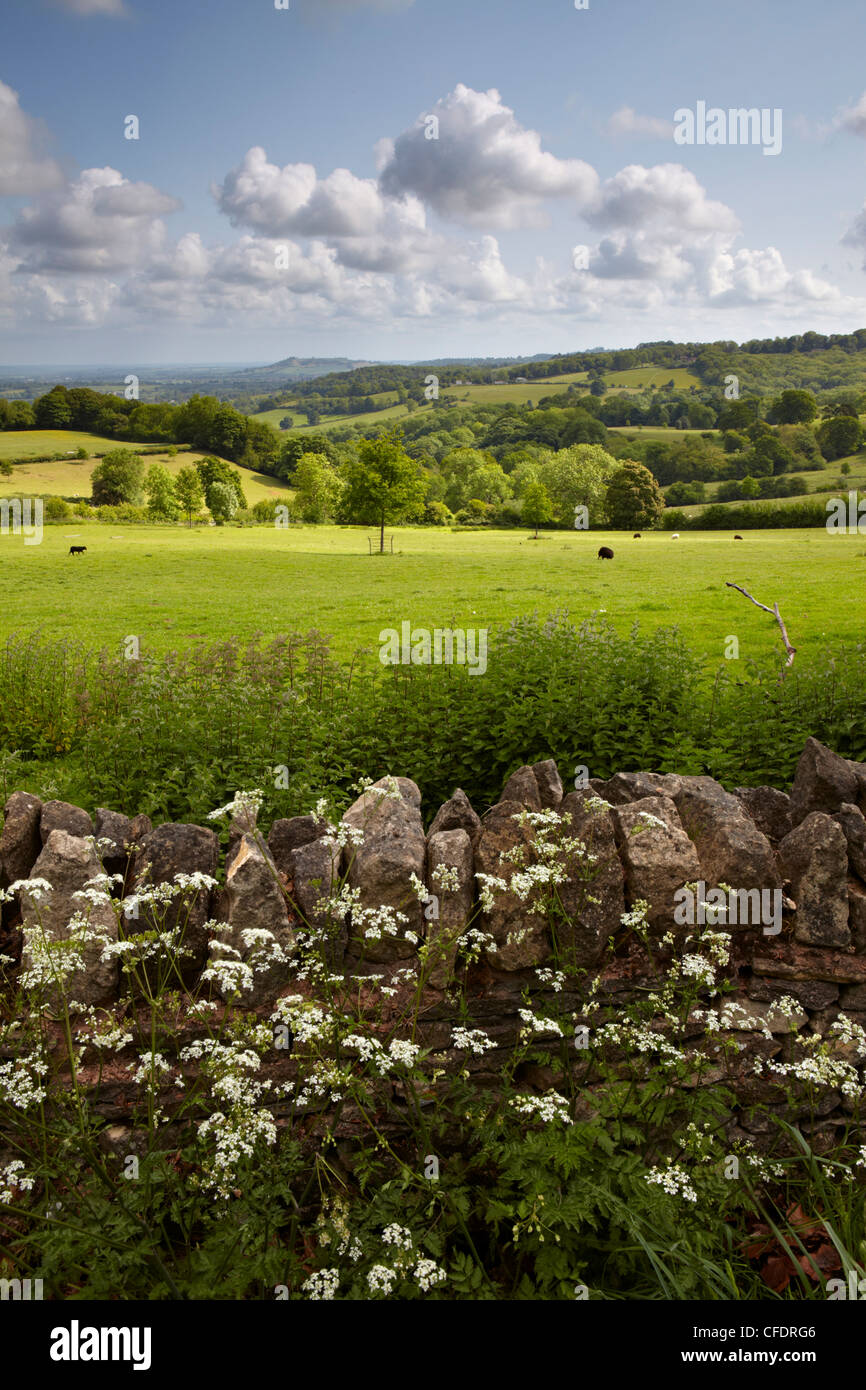A summer scene in the Cotswold countryside near Saintbury, Gloucestershire, The Cotswolds, England, United Kingdom, - Stock Image