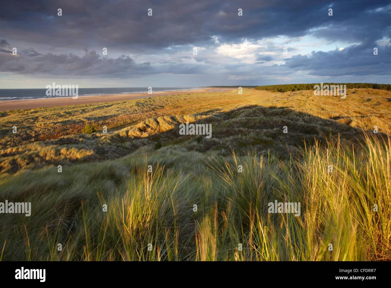 Dramatic last light on the dunes overlooking Holkham Bay, Norfolk, England, United Kingdom, Europe - Stock Image