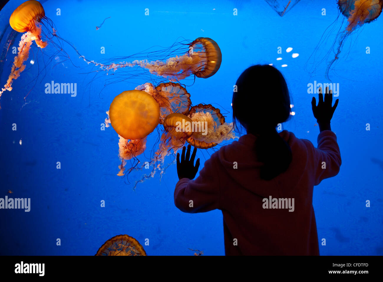 Young girl observes Jellyfish display at Shaw Ocean Discovery Centre Aqaurium, Vancouver Island. - Stock Image